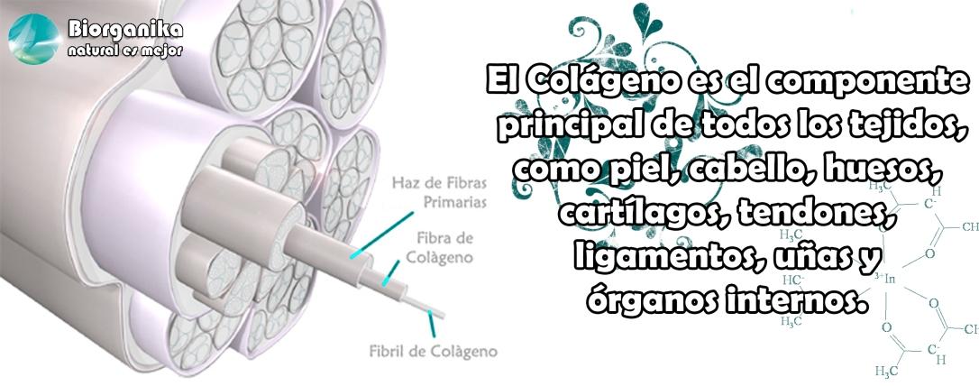 colageno 3